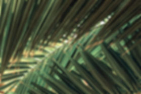 CITRINE-ESTATES-palm-leaves.jpg