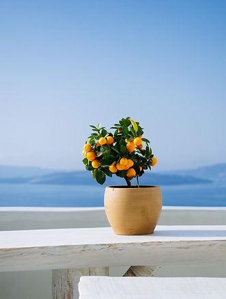 orange-pot.jpg