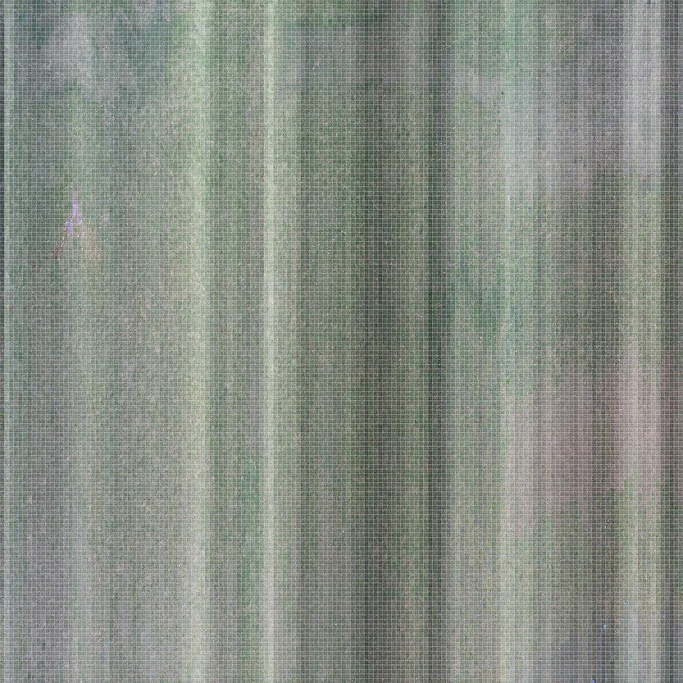 Full Lawn (small).jpg