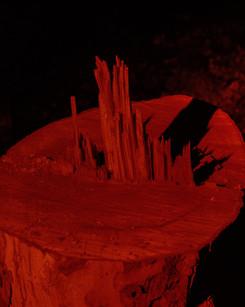 树桩2.jpg