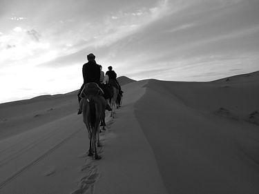 Camels 4 b+w.jpg