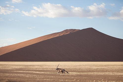 Oryx on the run