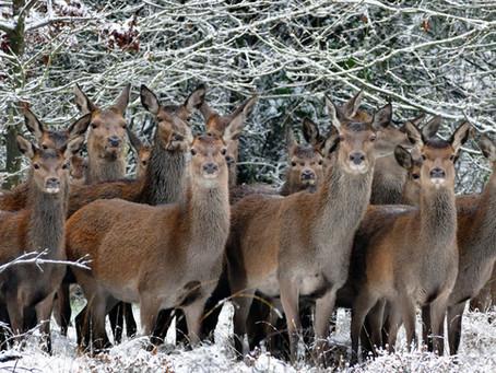 Deutsche Wildtierstiftung mit Zahlen