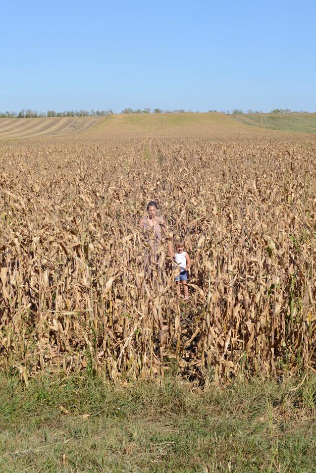 Maize I