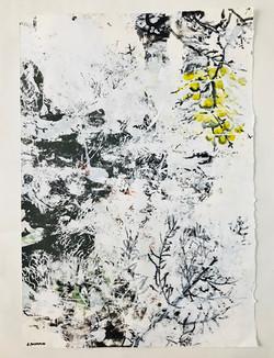 Longevity's Garden #15 47cm x 67cm