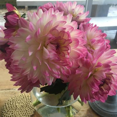 A vase with Delias