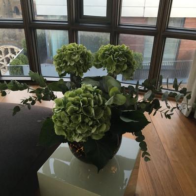 Hydrangeas & Eucalyptus - All Green