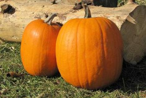 Small to Medium Pumpkins