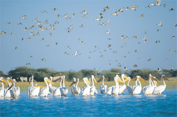 Nal Sarovar Bird Sanctuary- Top 10 places to visit in Ahmedabad