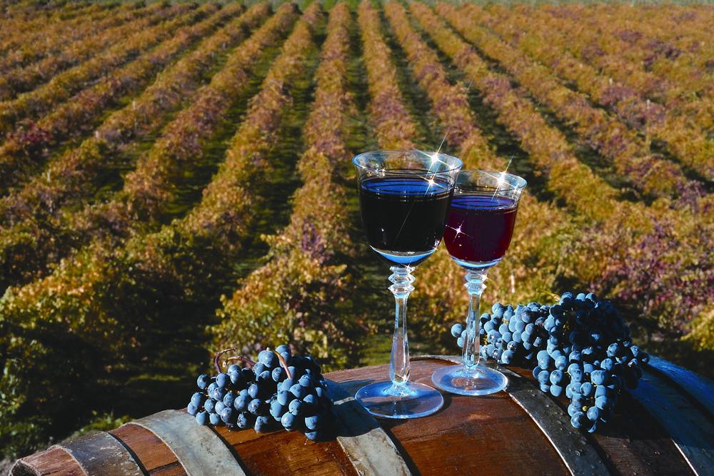 Wine Tour Napa and Sonoma Valley