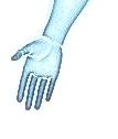Nadgarstek i ręka