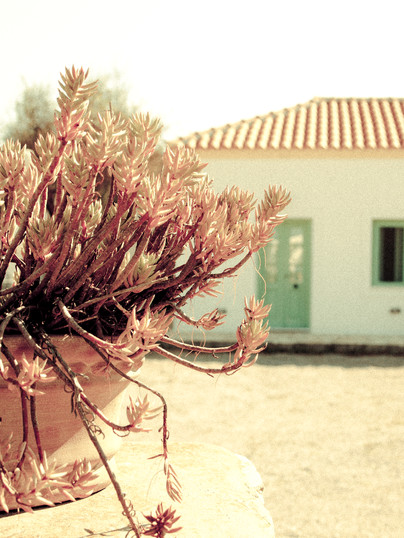 Welcome to Villa Lemonia