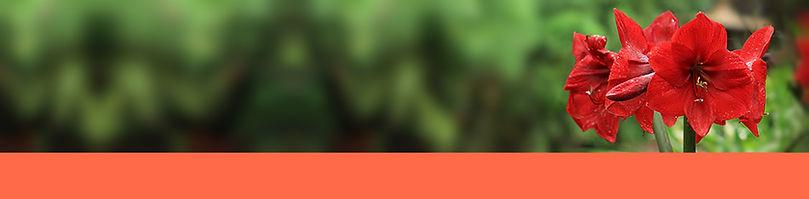 header with orange.jpg