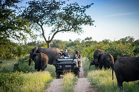Simbavati Safari Lodges Wildlife 28.jpg