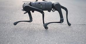 China made robot dogs