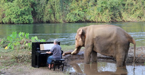 Piano for rescued elephants