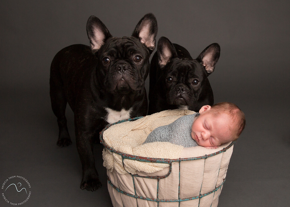 baby and puppies at Patricia Thom Photography Studio