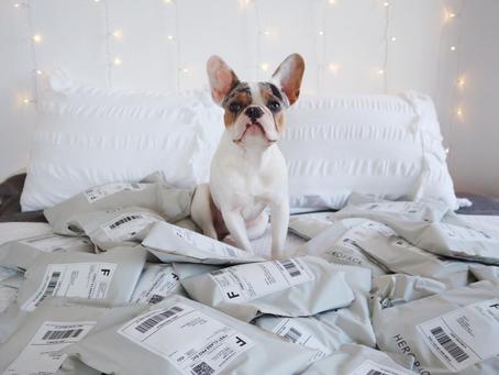 Case Study - Boho Pups