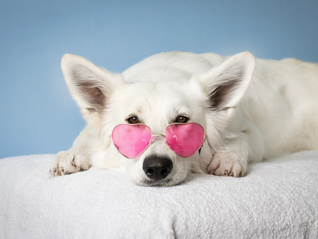 How can you tell if your pet's heart is pumping right?