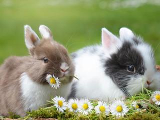 ¿Por qué elegir una jaula grande para conejos?
