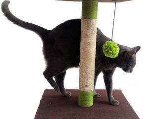 Características de un buen rascador para gatos