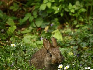 ¿Cómo elegir una jaula para conejos?