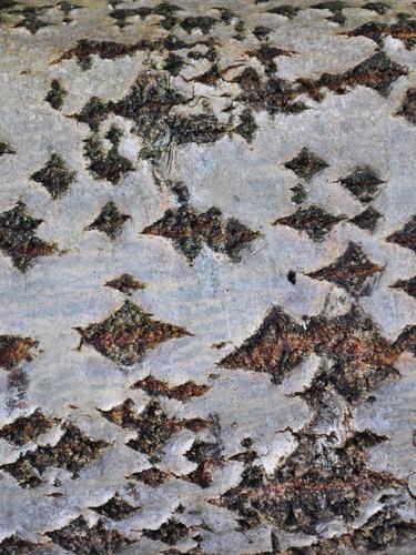 listening and listening (birch bark)