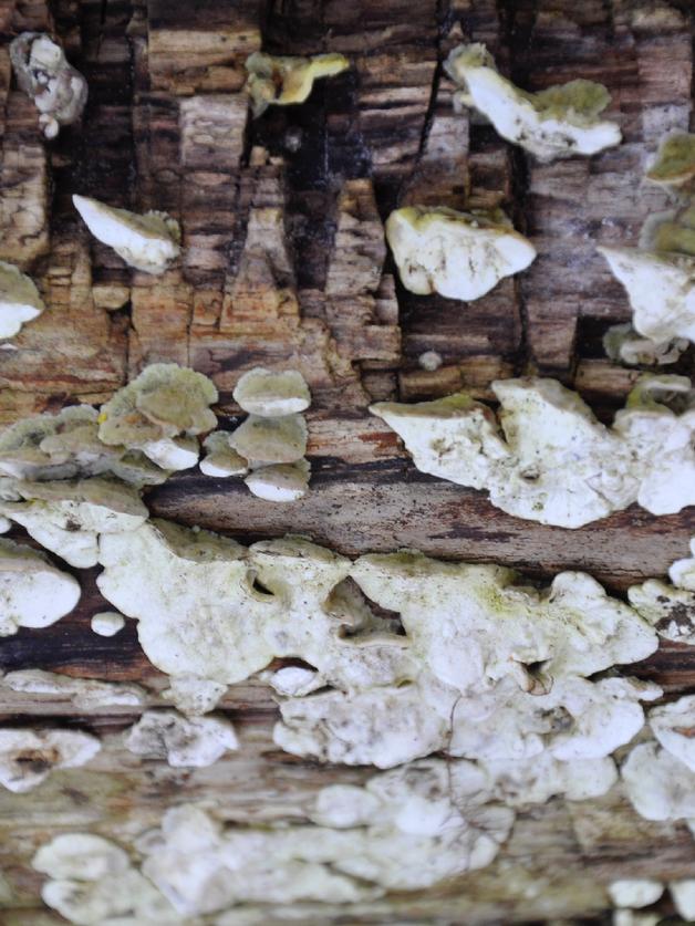listening and listening (mushroom lake)