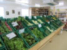 salade, épinards, pomme-de-terre, fenouil, broncolis, haricots, tomates, carottes, cotes de bettes, concombres, oigons
