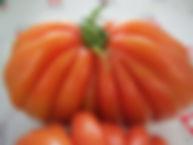 tomates du pays,variétés genevoises, coeur de boeuf, la charnue, jaune et noire, minis-tomates,