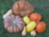 courges, halloween, décoration,