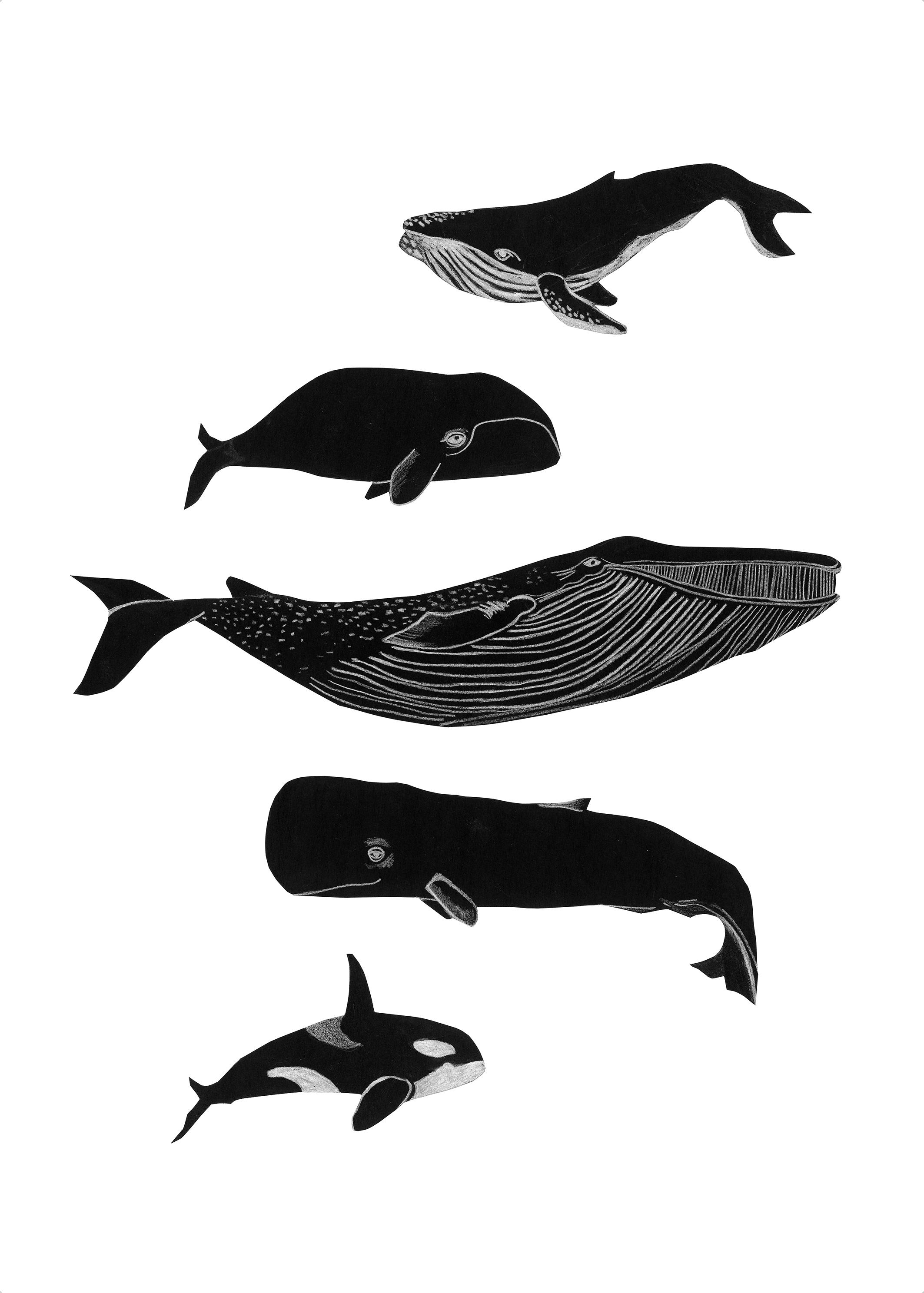 Ana Maraž Whales for you