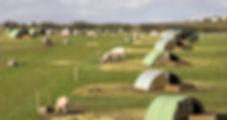 pigs farm UK pork