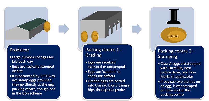 egg production UK