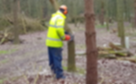 Chainsaw timber oak sampling