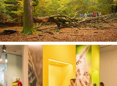 Nationalpark Eifel Wald, Wasser, Wildnis …