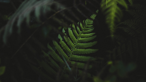 HIVEDesignCo_Foliage3.png