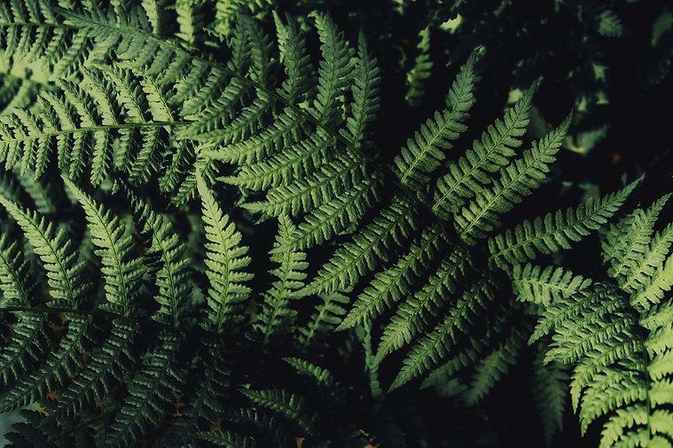 HIVEDesignCo_Foliage7.jpg