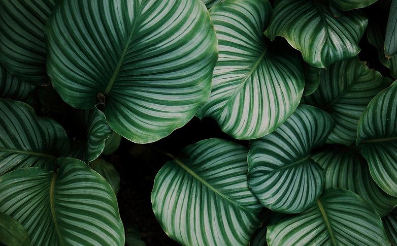 HIVEInteriorDesign-StripedFoliage_edited