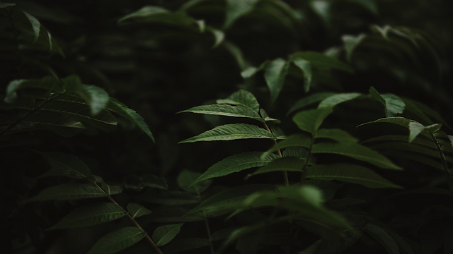 HIVEDesignCo_Foliage1.png