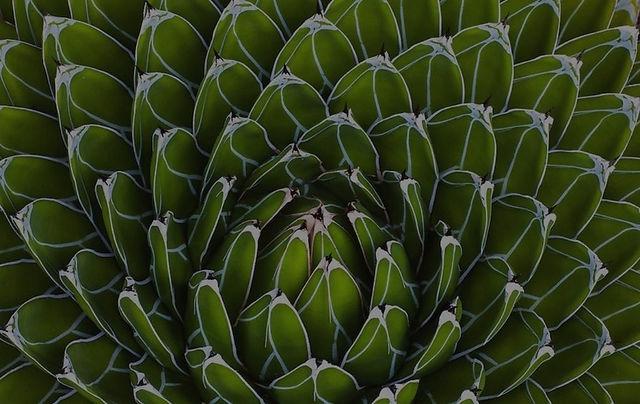 HIVEDesignCo_Foliage9.jpg
