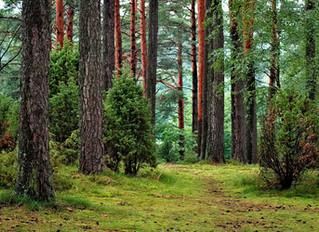 Fortnite Entwickler kauft ganze Wälder, um Abholzung zu verhindern