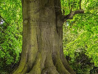 Mann pflanzte 40 Jahre lang täglich einen Baum – das kam dabei heraus!