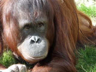 Massensterben auf Borneo und Sumatra