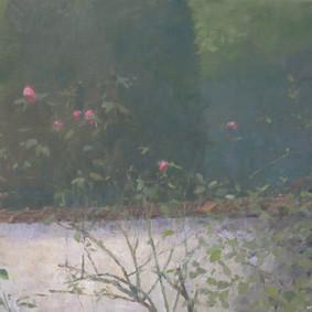 Rosiers (mur de jardin)