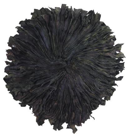 Anémone noire