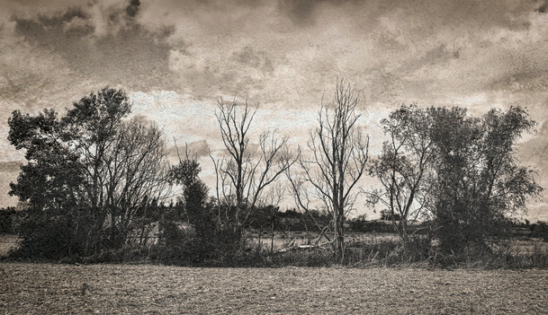 Landscape XXVII