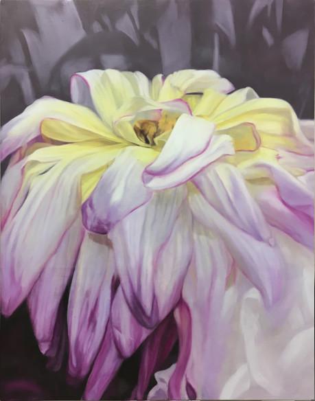 Dahlia jaune & rose