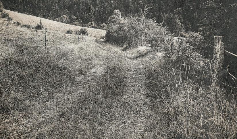 Landscape XII