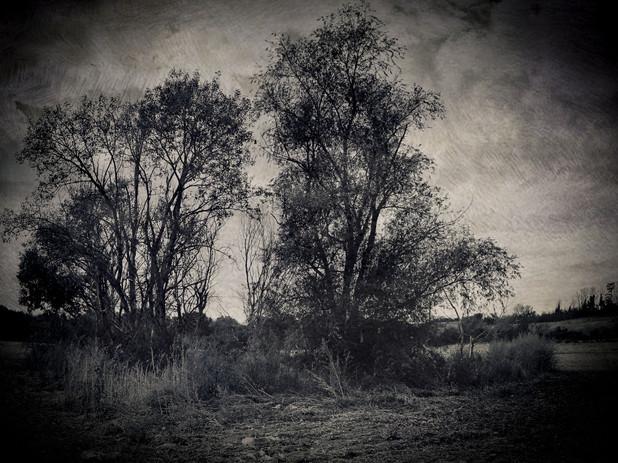 Landscape XXVIII